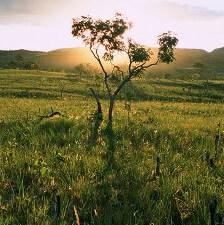 BRA Natural Cerrado Fazenda San Martin